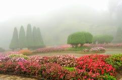 Färgrik blomma i härlig trädgård med regndimma Royaltyfri Foto