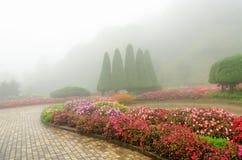 Färgrik blomma i härlig trädgård med regndimma Arkivbild