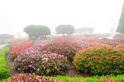 Färgrik blomma i härlig trädgård med regndimma Arkivbilder