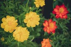 Färgrik blomma i sommar arkivbild
