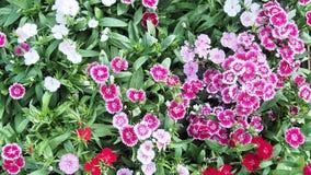 Färgrik blomma i trädgård royaltyfri bild