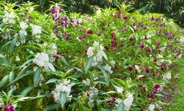 Färgrik blomma i trädgården Arkivfoto