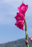 Färgrik blomma med bakgrund för blå himmel Arkivbild