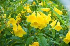 Färgrik blomma med droppvatten Fotografering för Bildbyråer