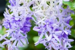 Färgrik blomma med droppvatten Arkivfoto