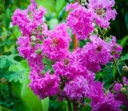 Färgrik blomma med droppvatten Arkivbild