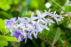 Färgrik blomma med droppvatten arkivfoton