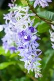 Färgrik blomma med droppvatten royaltyfria foton