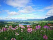 färgrik blomma- och molnutrymmesikt Royaltyfri Fotografi