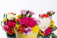 Färgrik blomma på vit bakgrund royaltyfria bilder