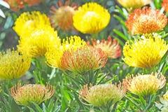 Färgrik blomma som blommar med grön bladbakgrund arkivbilder