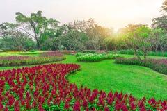 Färgrik blomma växt på gräsmatta för grönt gräs med gruppen av träd i en bra omsorgunderhållsträdgård, under solsken och vit himm royaltyfria bilder