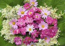 Färgrik blommabakgrund med rosa rosor, tusenskönor Fotografering för Bildbyråer