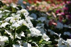 Färgrik blommablom i parkera Royaltyfri Bild