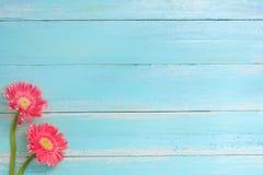 Färgrik blommabukett på blå träbakgrund fotografering för bildbyråer