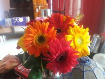 Färgrik blommacloseup Royaltyfri Bild