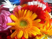 Färgrik blommacloseup Arkivfoton