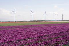 färgrik blommafjäder Arkivbilder