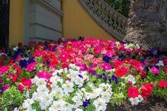 färgrik blommafjäder Arkivfoto