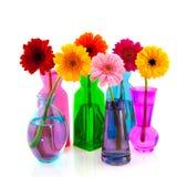 färgrik blommagerber arkivfoton