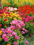 färgrik blommaglädje Royaltyfria Foton