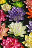 färgrik blommalotusblomma royaltyfri fotografi