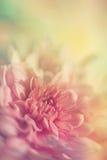 Färgrik blommanärbild Royaltyfri Foto