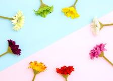 färgrik blommaram Royaltyfri Bild