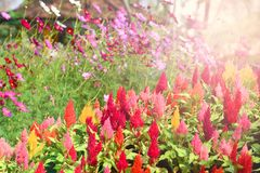 Färgrik blommasommarträdgård arkivfoton