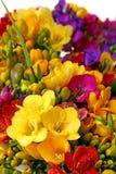 färgrik blommaspringtime arkivfoton