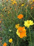 färgrik blommaträdgård Royaltyfri Bild