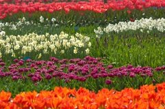 färgrik blommaträdgård royaltyfria foton