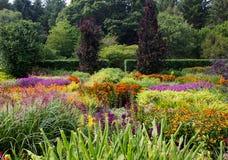 färgrik blommaträdgård Arkivfoto
