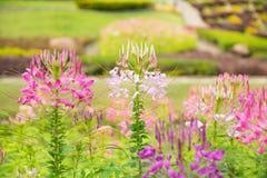 färgrik blommaträdgård Arkivbild