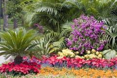 färgrik blommaträdgård Royaltyfri Fotografi