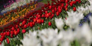 färgrik blommaträdgård Härligt och hisnande vårlandskap arkivfoton