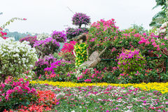 Färgrik blommautställning Royaltyfri Bild