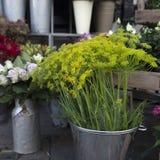 färgrik blommavariation Royaltyfria Bilder