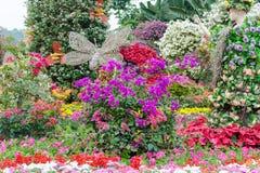Färgrik blomsterutställning Royaltyfri Fotografi