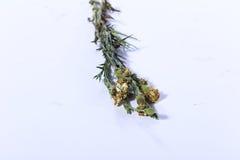 Färgrik bukett av den konstgjorda blomman, vit bakgrund fotografering för bildbyråer