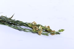 Färgrik bukett av den konstgjorda blomman, vit bakgrund royaltyfria foton