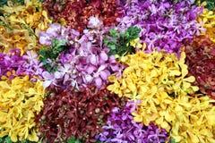 Färgrik bukett av orkidéblomman royaltyfri bild