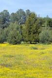 Färgrik bukett av vårblommor och ökenguld i ett lantgårdfält av rutt 58, öst av Santa Margarita, CA Fotografering för Bildbyråer