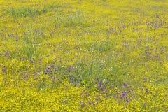 Färgrik bukett av vårblommor och ökenguld i lantgårdfält av rutt 58, öst av Santa Margarita, CA Fotografering för Bildbyråer