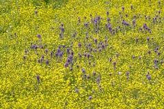 Färgrik bukett av vårblommor och ökenguld i lantgårdfält av rutt 58, öst av Santa Margarita, CA Arkivbilder
