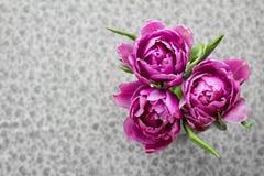 Färgrik bukett av violetta tulpan Arkivbild