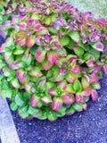 Färgrik buske Royaltyfri Foto