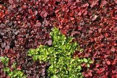 Färgrik buske Royaltyfri Bild