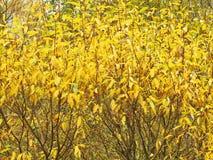 Färgrik buske i höst Royaltyfria Foton