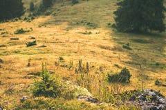färgrik bygdsikt i carpathians - retro tappning Arkivfoto